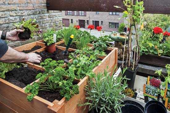 Square-Foot-Urban-Garden jpg